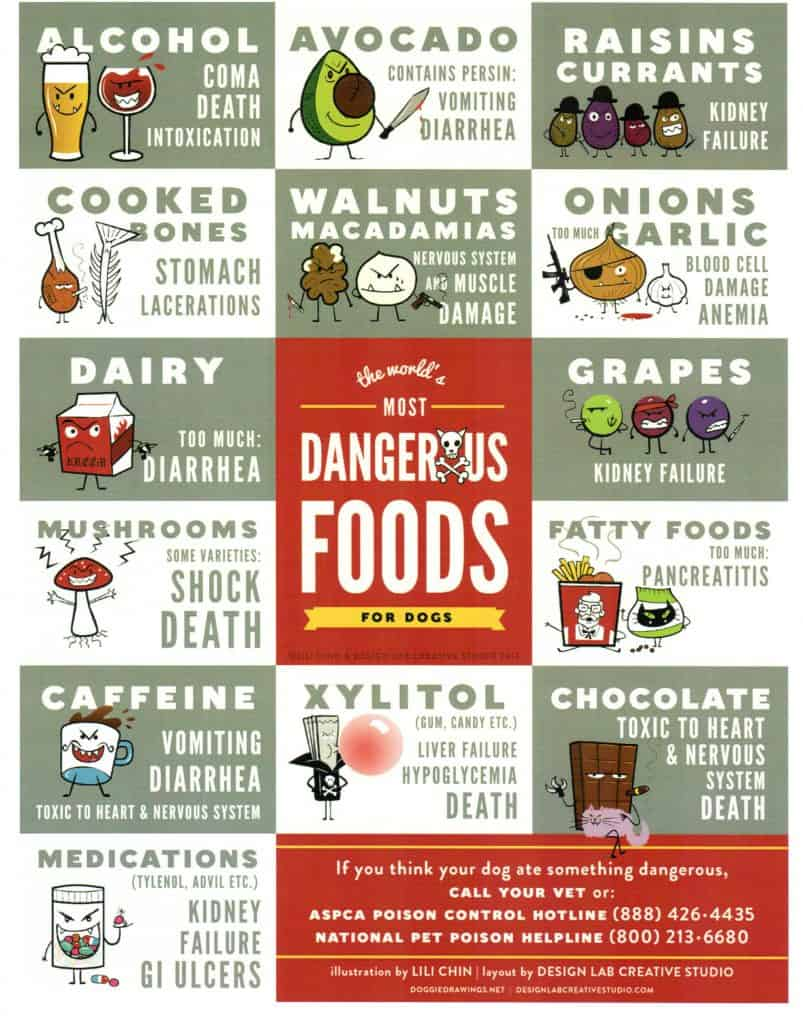 Toxic food for dogs