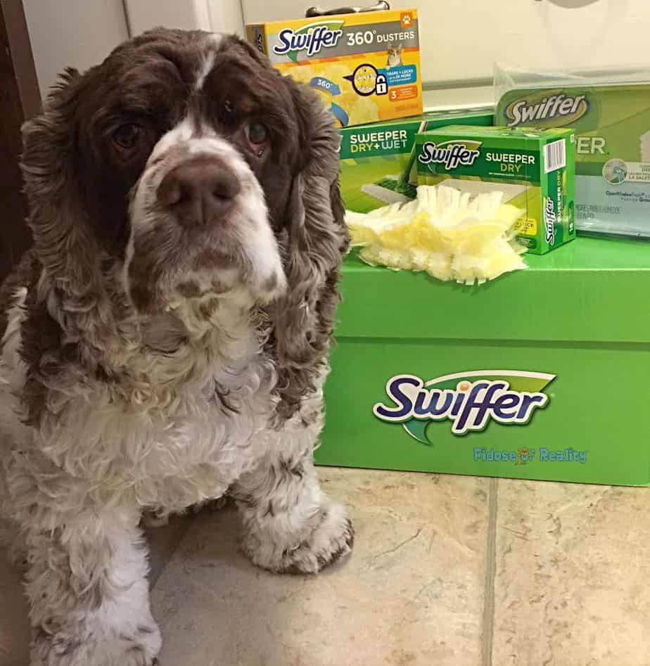 Swiffer box to clean up pet messes