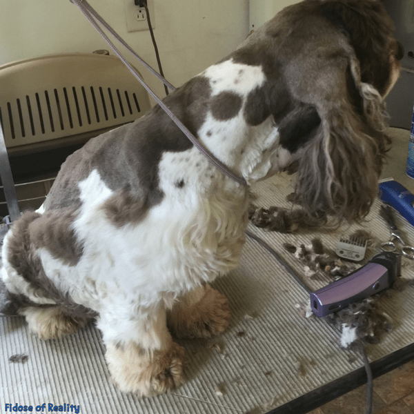 Learn to groom your dog at home