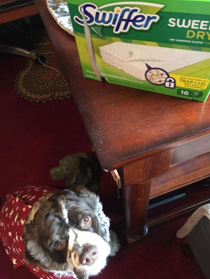 Dry cloths for dog hair from Swiffer