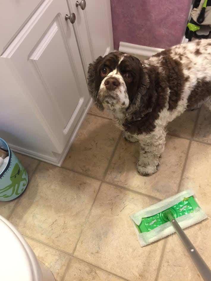 Swiffer dry mop