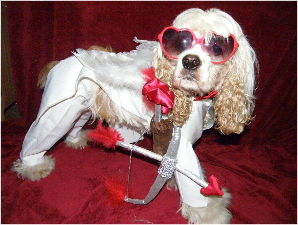 Cupid dog