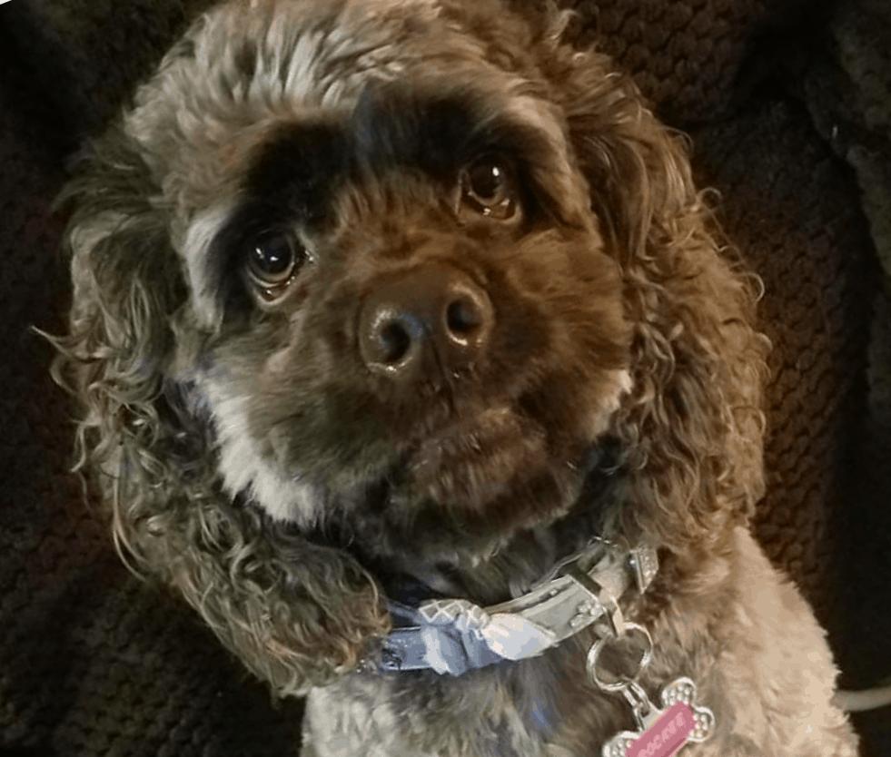 Most kissable dog contest winner