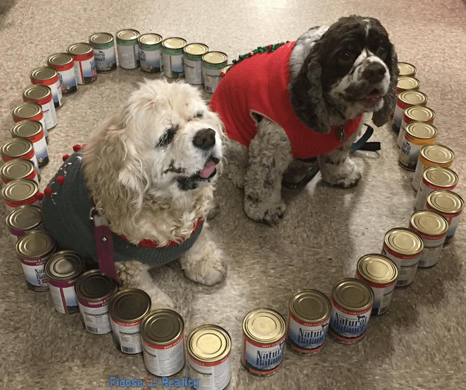 Cute dogs in a heart shap