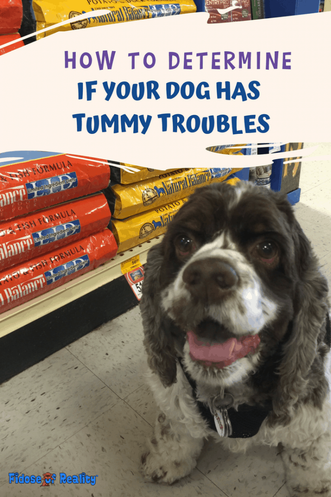 How to Help a Dog with Tummy Troubles