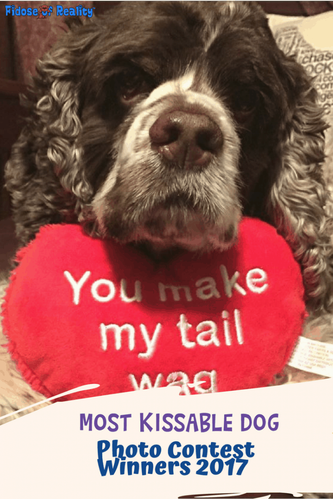 Most kissable dogs photo contest