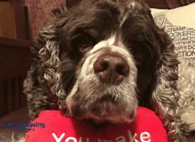 Most Kissable Dog Photo Contest Winners 2017