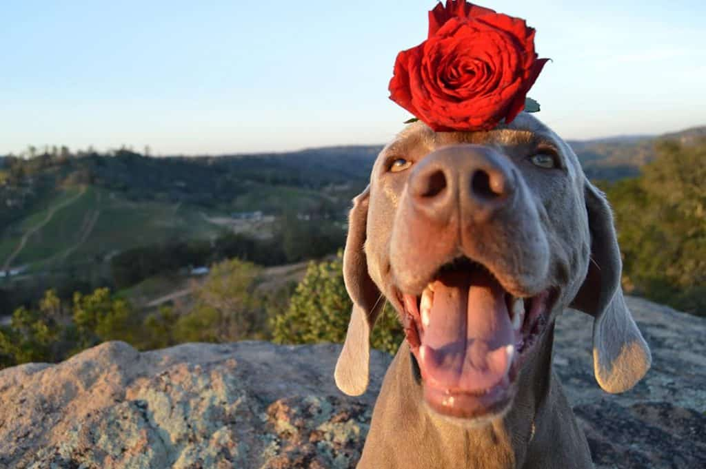 Most kissable dog winner