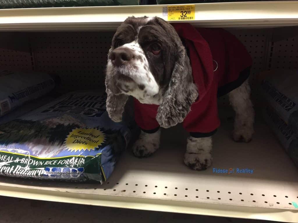 Dog on shelf Natural Balance