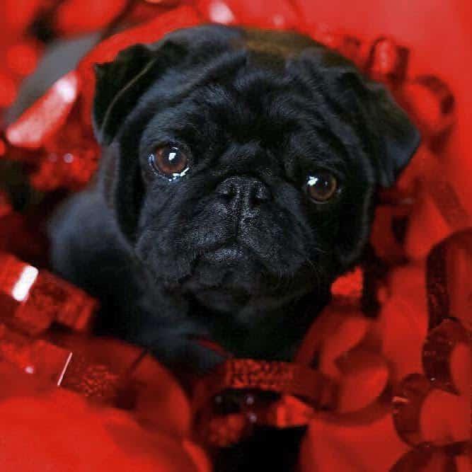 Most Kissable dog photo contest winner