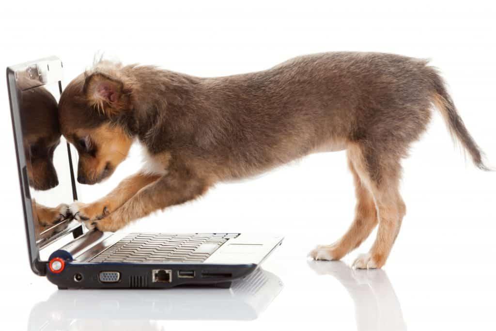 Dog writing at the computer