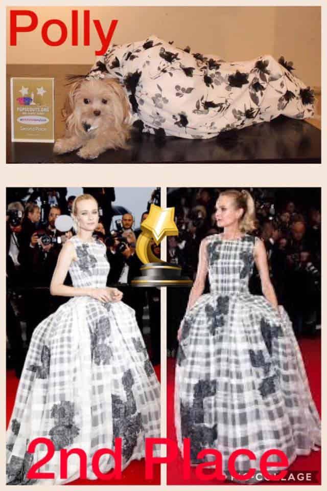 Dog celebrity look alike