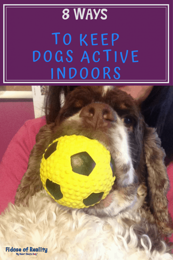 8 Ways to Keep Dogs Active Indoors