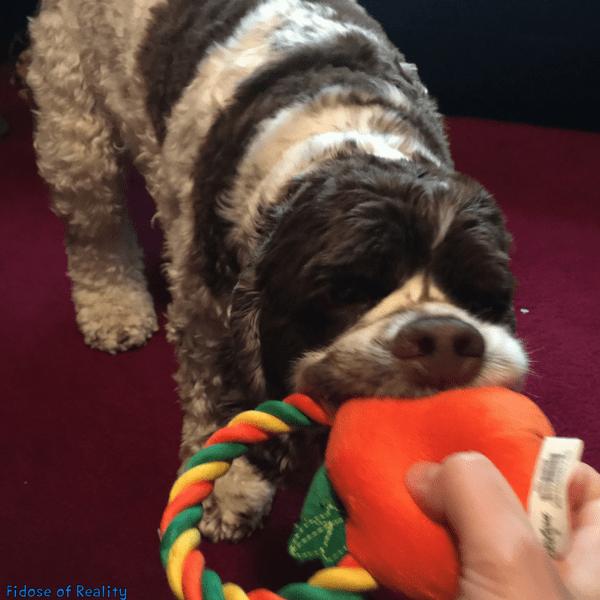 dog indoor games