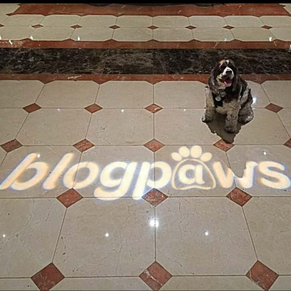Dexter at BlogPaws Conference
