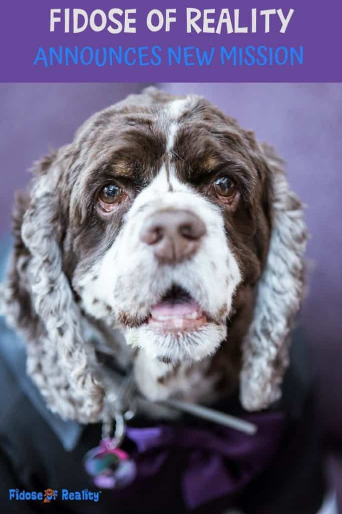 A health/wellness/lifestyle dog blog for Cocker Spaniels and their canine friends