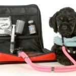 Dog Vital Signs Every Dog Parent Should Know