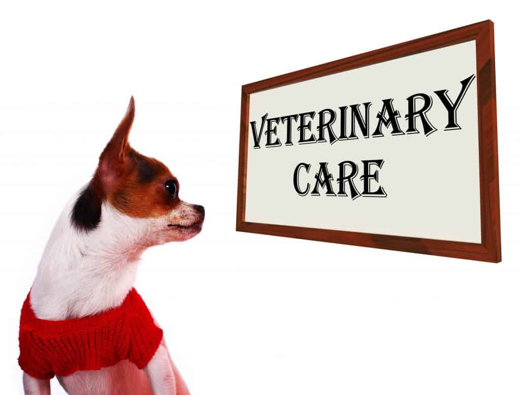 Veterinary visit for arthritis dog