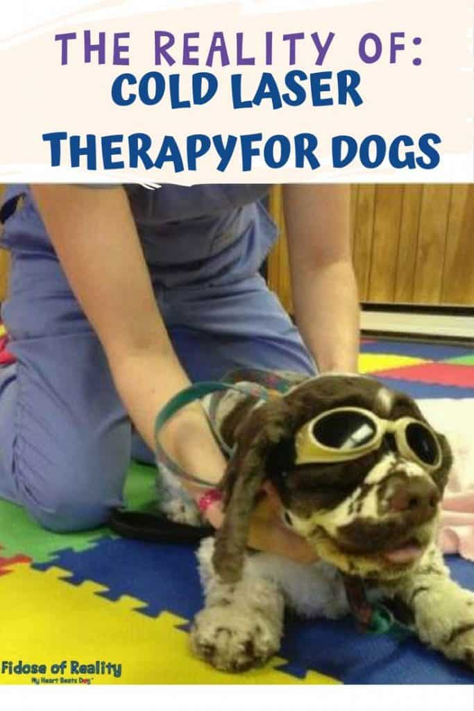Dog cold laser therapy facts