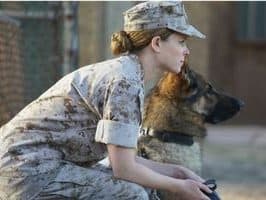Hero Dogs Every Dog Lover Should Know