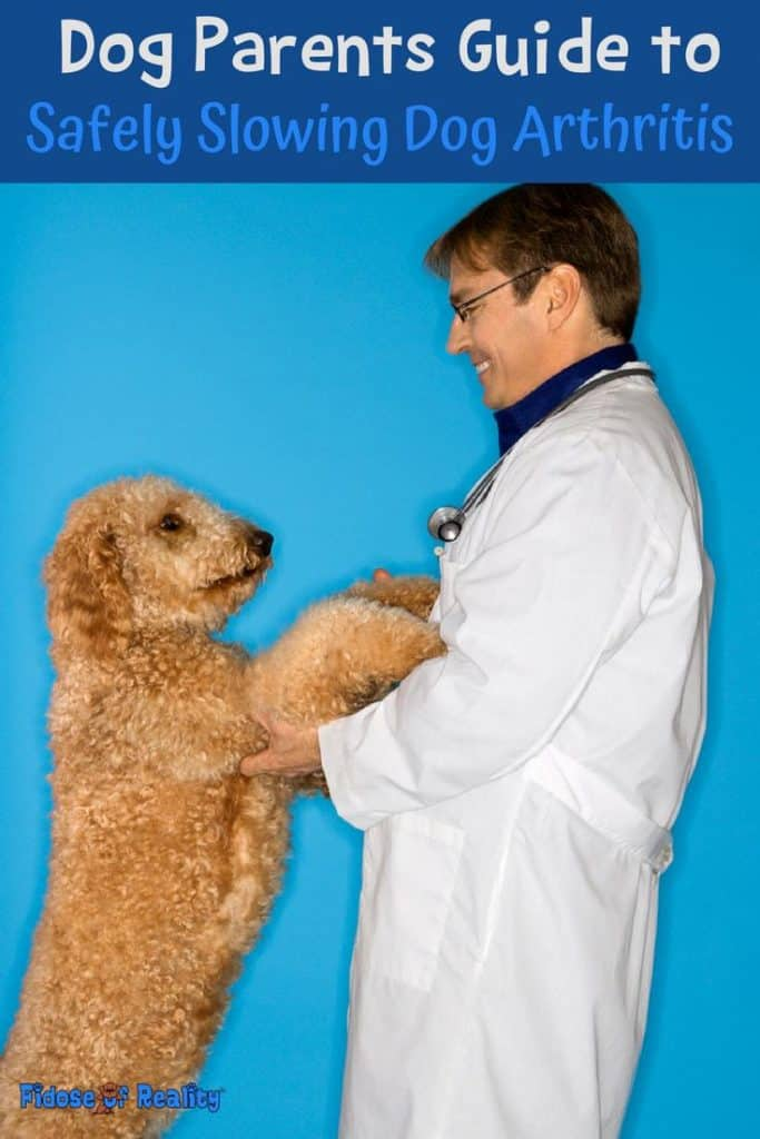 Dog Parents Guide to Safely Slowing Dog Arthritis