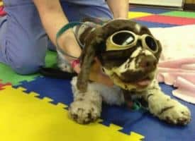 The Reality of Cold Laser Treatment for Dogs