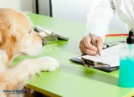 Questions to Ask Before Dog Surgery