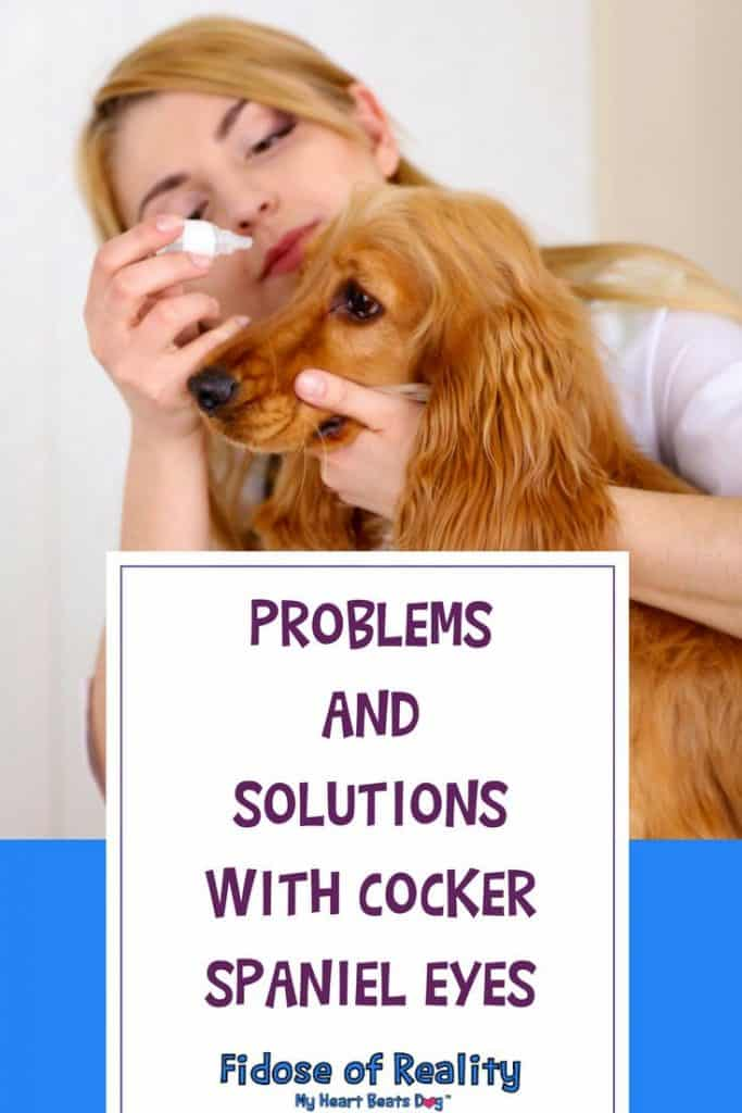 Problems and Solutions with Cocker Spaniel Eyes