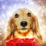 Gift Guide: Dog Lover Items