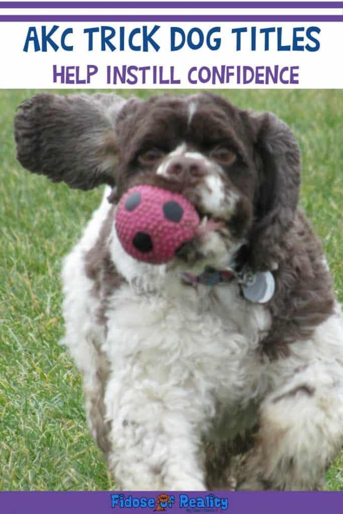 AKC Trick Dog title