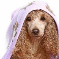 dangers of dog shampoos