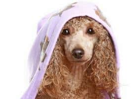 dangers of dog shampoos