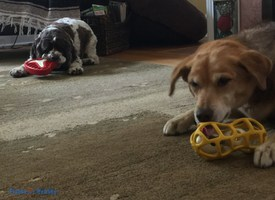 8 Ways to Prevent Dog Boredom Like a Pro #jwpet