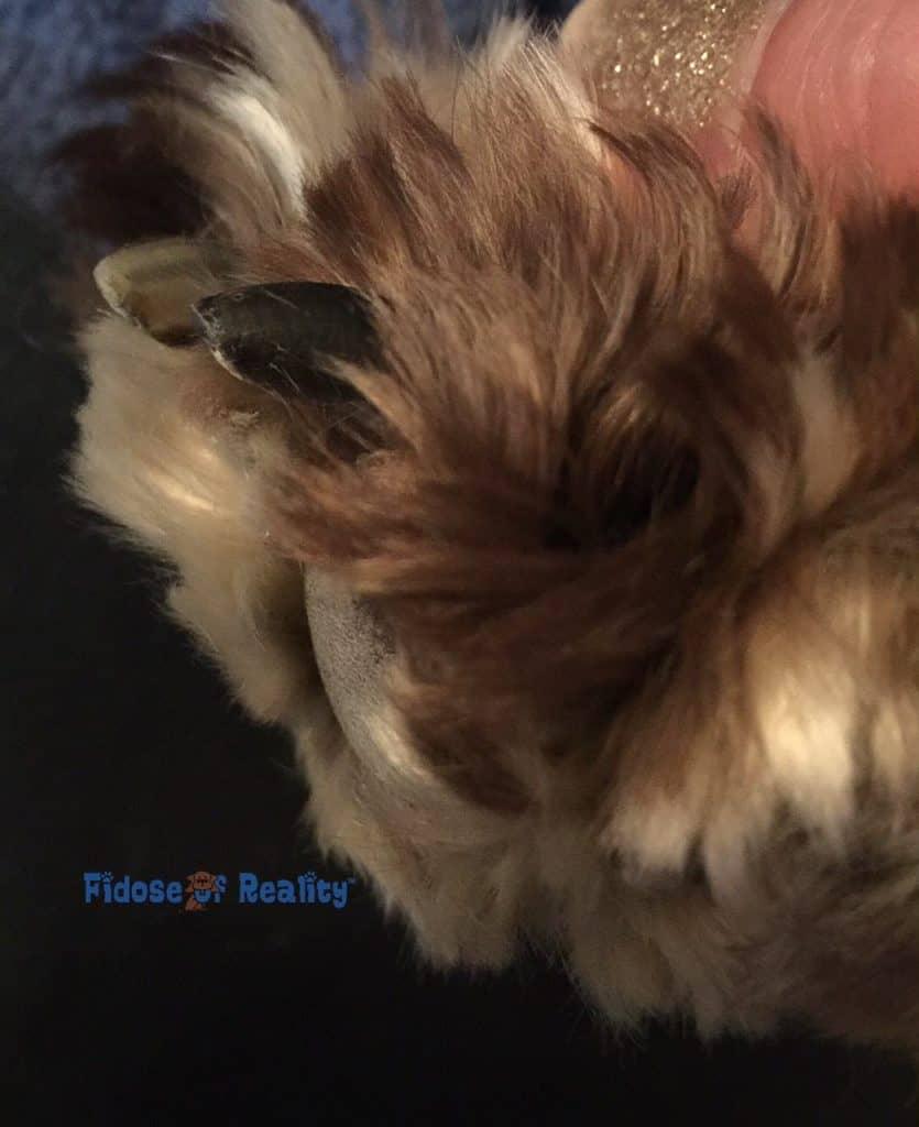 Dog nails grooming