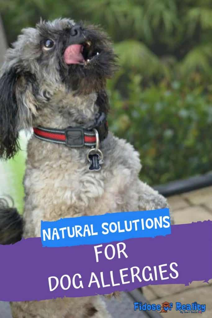 natural solutions for dogs with allergies