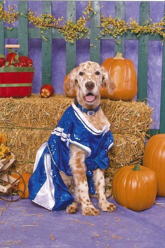 Dog Halloween photo contest