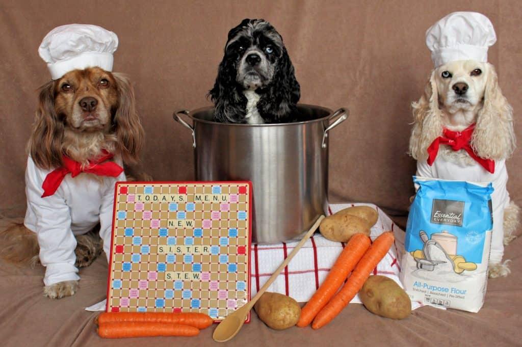 Dog chefs
