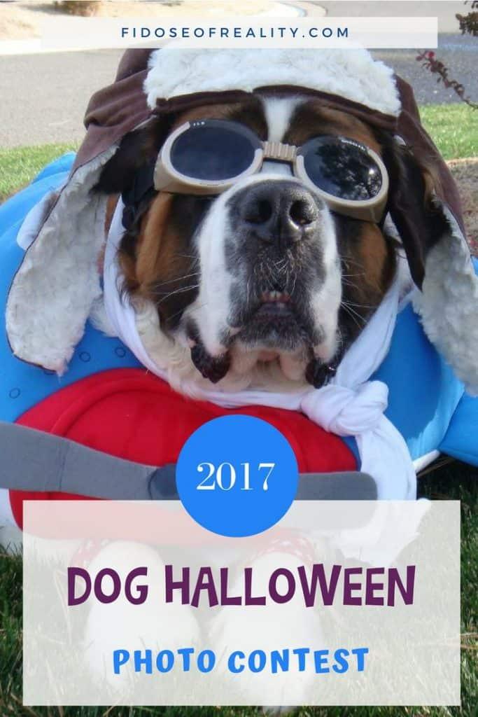 dog halloween photo contest - Pet Halloween Photo Contest