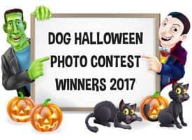 Dog Halloween Photo Contest Winners 2017