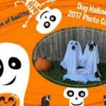 Dog Halloween Photo Contest 2017