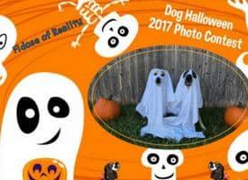 Dog Halloween Photo Contest 2017