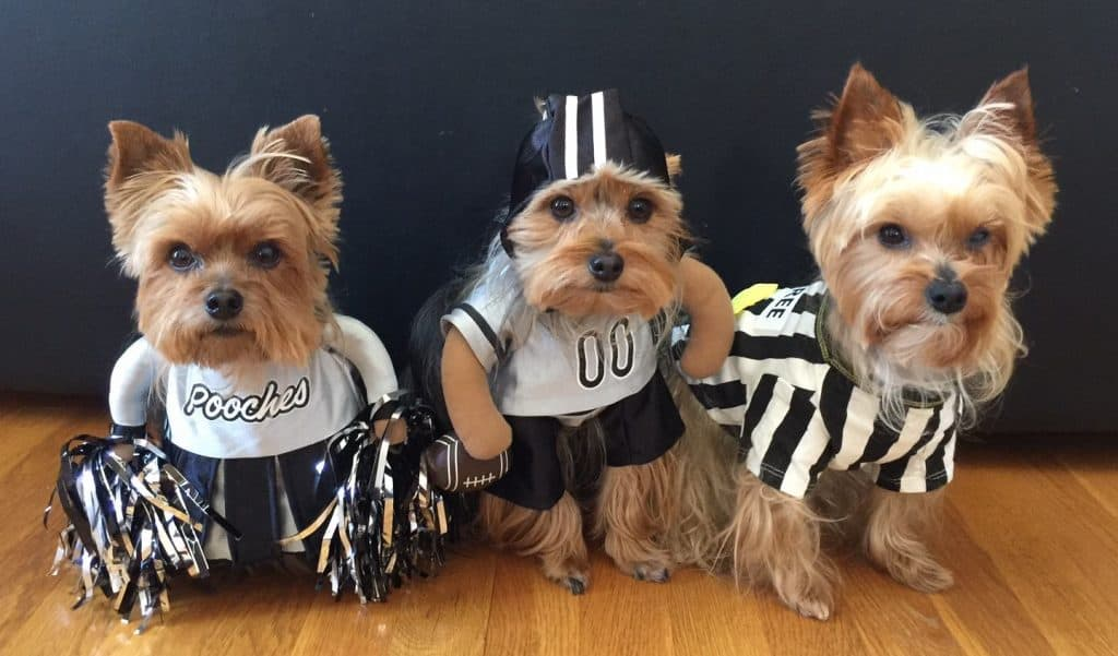Yorkies Football Costumes