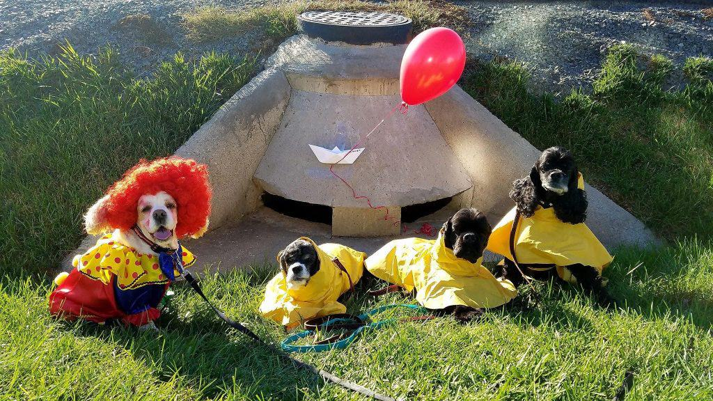 "Stephen Kings ""It"". If you come with us, you'll float too! Dogs L to R Harley, Lexie, Kyle, Sophie . Submitted by Cheryl Engel."