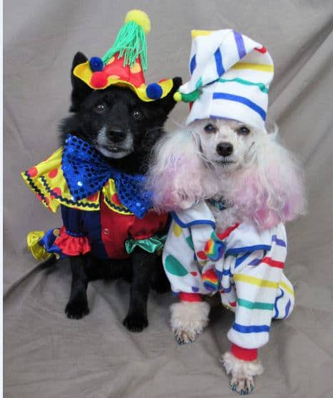 Dogs for Halloween