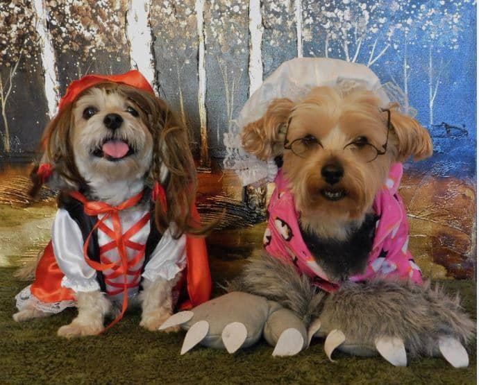 Dog Halloween photo contest grandma and wolf