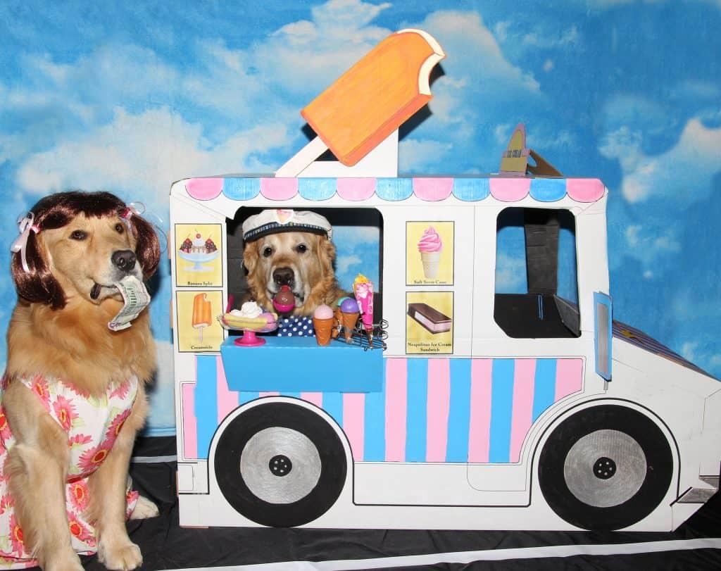 Dog Halloween winner