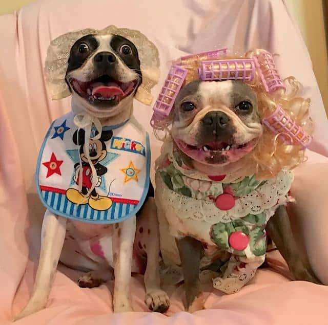 Dog Halloween baby costume