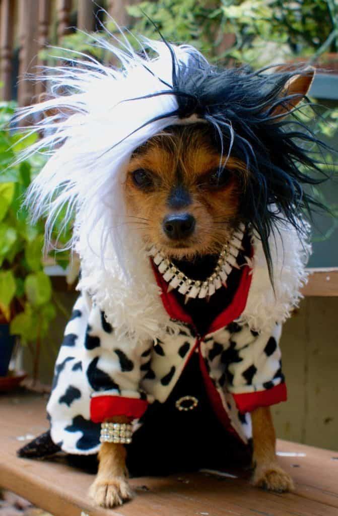 Dog as Cruella DeVille