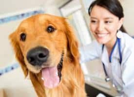 How to Give Your Dog a Pill