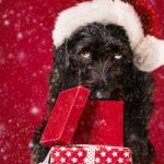 Dex the Halls 2017 Dog Holiday Photo Contest